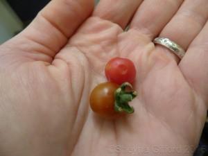 tiny-tomatoes.JPG